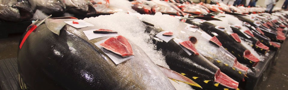 fish-processing-display