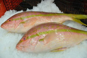 fresh caught fish on ice